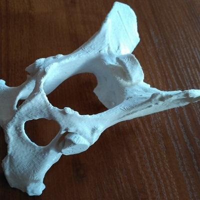 druk 3d kości po obróbce wydruków rzeszów